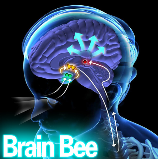 <strong>2020年国际Brain Bee脑神经科学</strong>